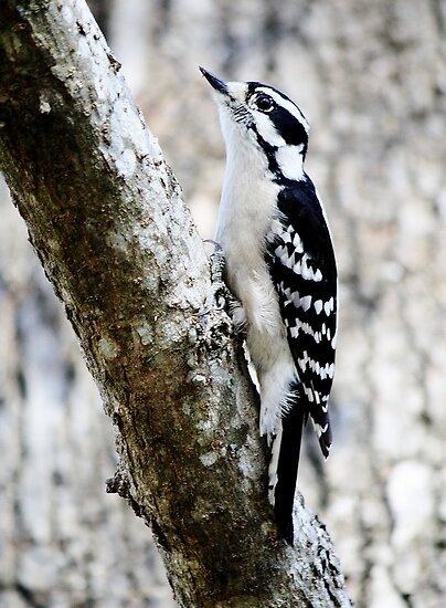 Pretty Birdie by Paulette1021