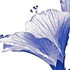 Mono blue Hibiscus in my garden:)...Got Featured Work by Kornrawiee