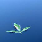 Blue by Gustav Snyman