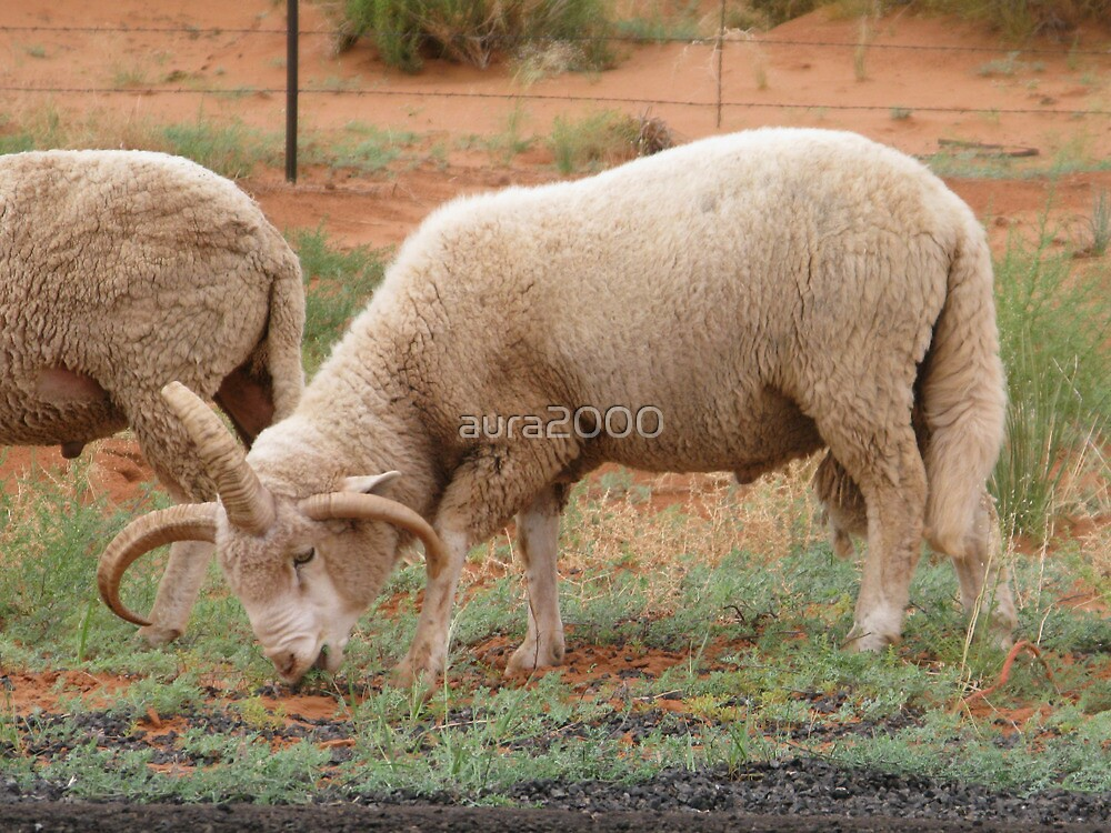 Three horned Sheep by aura2000