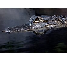 Later Gator Photographic Print