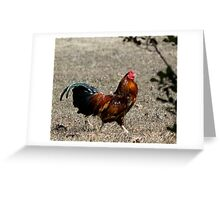 Rue of the rooster  Greeting Card