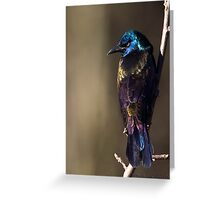 Common Grackle female Greeting Card