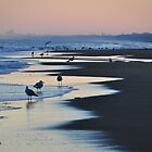 Seagulls on the beach at Wassenaar Holland by Javimage