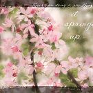 Pink Tree Blossom by JulieLegg