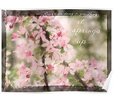 Pink Tree Blossom Poster