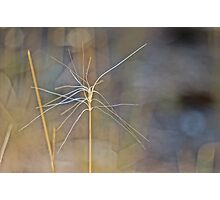 Grass abstract Photographic Print
