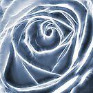 Ice Rose by fotoholic
