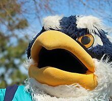 Sammy The Seahawk by Cynthia48