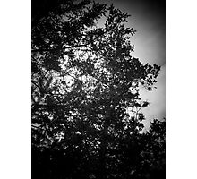 My spooky tree Photographic Print