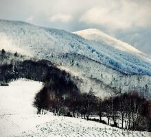 Snowtops by Sweet T Photography