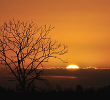 African sunrise over Holland by Javimage