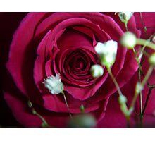 rose vday  Photographic Print