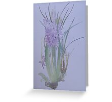 Hyacinth on a cold day Greeting Card