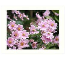 Pink Windflowers! Art Print