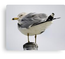 Sea Gull by the Sea Side Canvas Print