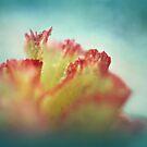 carnation on cloud nine. by Angel Warda