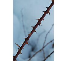 I like it when you touch my thorns Photographic Print