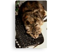 Adding more fur to an already furred keyboard ;o) Canvas Print