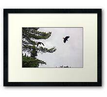 Double Eagle Framed Print