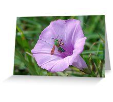 Green metallic bee on Ruellia Greeting Card