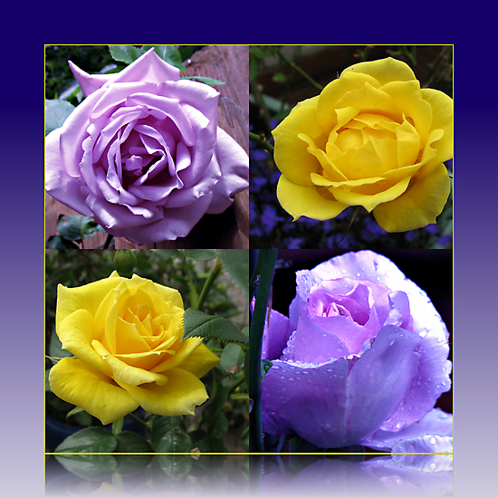 Exquisite Roses Collage by BlueMoonRose