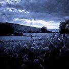 Night Light by Kory Trapane