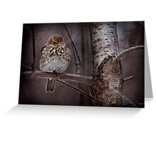 Hermit Thrush Greeting Card