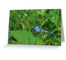 Blue dragonfly on a leaf Greeting Card