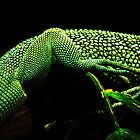 Lizard Skin by Marcia Rubin
