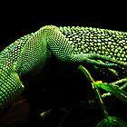 Lizard Skin by Marcia Rubin