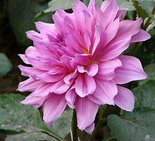 Pretty Purple Flower by dorcas13