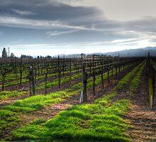 January Vineyard by Rachael Towne
