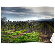 January Vineyard Poster