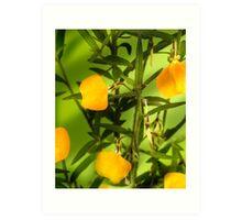 Australian yellow spade flowers Art Print