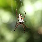 """Itsy Bitsy Spider"" by hunterrkn"