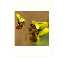Busy worker bees  Art Print