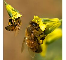 Busy worker bees  Photographic Print