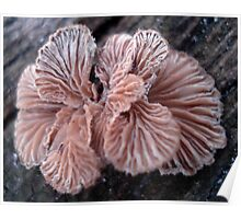 NATURE'S JEWELRY - SHELF FUNGUS GILLS Poster