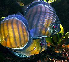 Pretty Fish Photo Colette Guggenheim by Colette Hera  Guggenheim