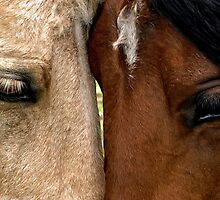 Face to Face by Dawne Olson