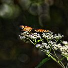 Happy Monarch butterfly by Rick  Friedle
