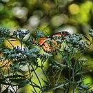 Happy Butterfly by Rick  Friedle