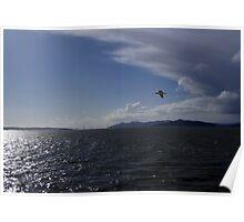 San Francisco Bay Seagull Poster