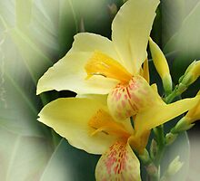 Gladiolus by RosiLorz