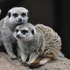 Meerkats by jainiemac