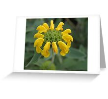 Yellow Bloom Greeting Card