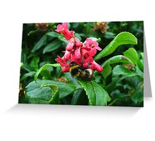 Bumble bee browsing at Bluff NZ Greeting Card
