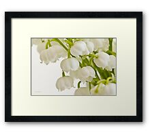 Lily Of The Valley - Macro  Framed Print