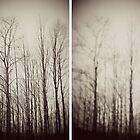 Trees by Elizabeth Pellette